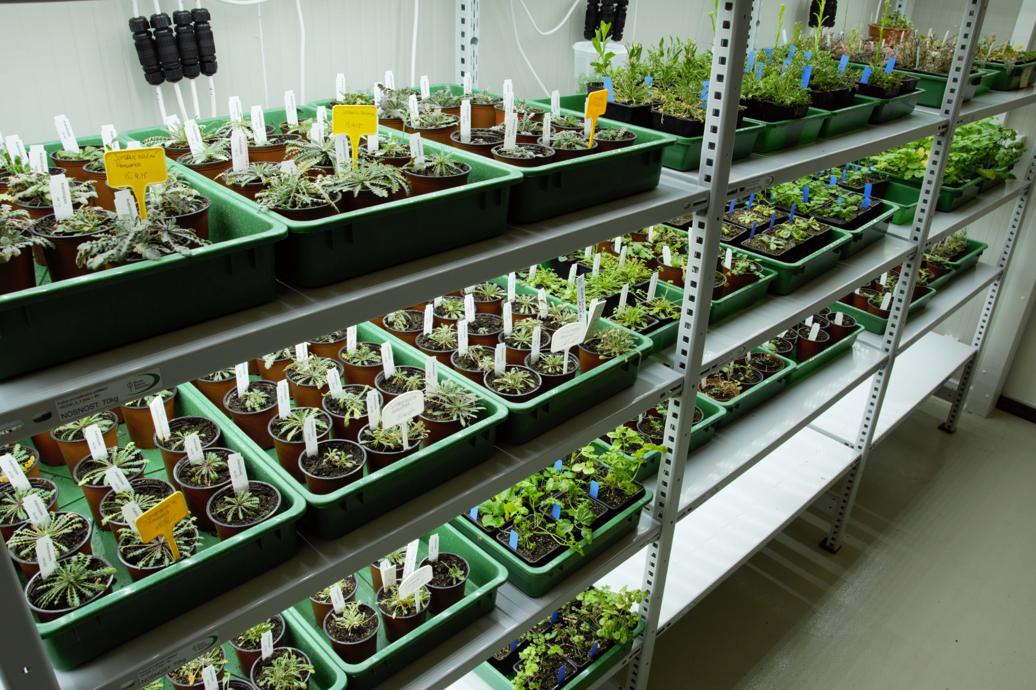 Cultivation Shelves Growth Chambers